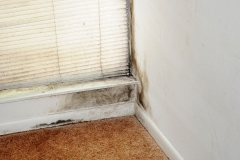How to Prevent Mold from Growing in Your Home Picture
